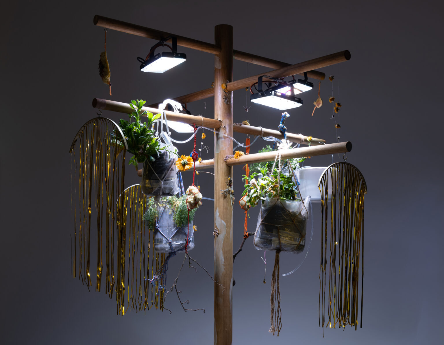 A sculptural installation with plants hanging from a tree-like wooden frame, lit by grow lights and decorated with golden foil.
